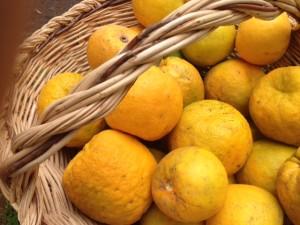 naranja agria3